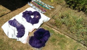 Kettle dyed fleece, hand painted roving heating in the sun